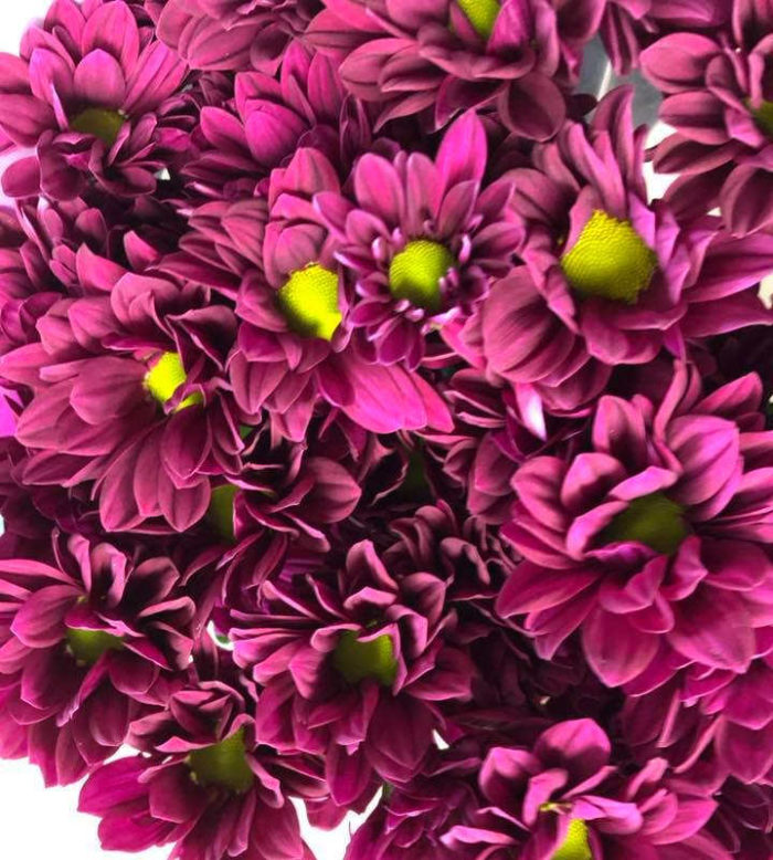 Flowers Cornwall
